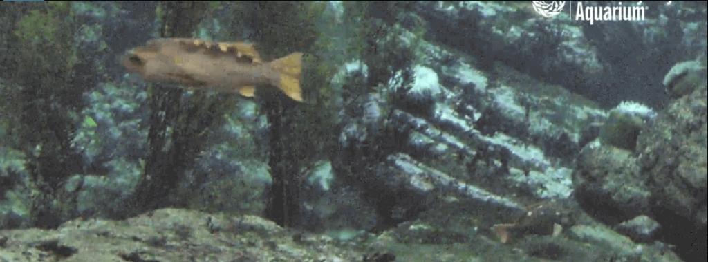 Monterey-Bay-Aquarium.png