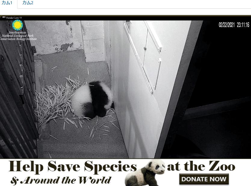 Smithsonian-Zoo-panda.png