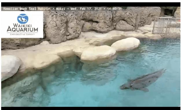Waikiki-Aquarium-Pool.png