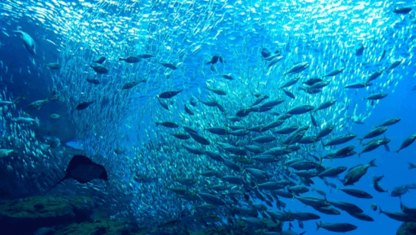 online-aquarium01.png